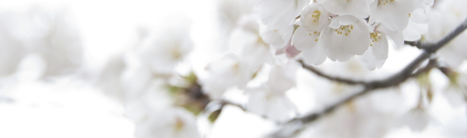 cropped-white-flowers-background-1.jpg